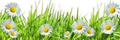 fruehjahr2 Frühjahrsputz für die Seele