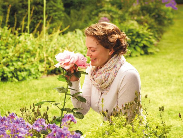 13 Wie bringen Sie Rosen bis zur prachtvollen Blüte?
