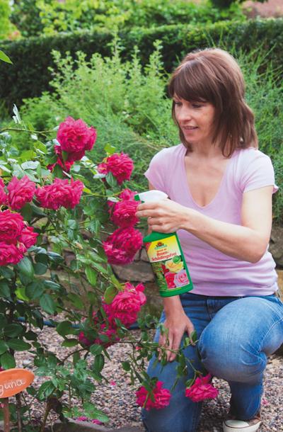 22 Wie bringen Sie Rosen bis zur prachtvollen Blüte?