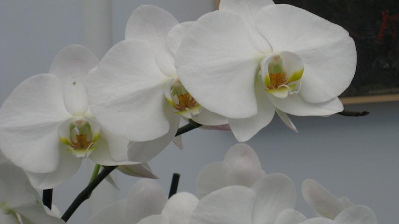 orchidee Einige Wohlfühltage in der Therme Lendava