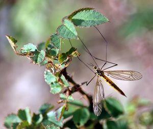 App schlägt Mücken in die Flucht
