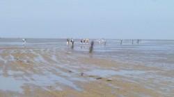 UNESCO Erbe Wattenmeer, unser Teil 2