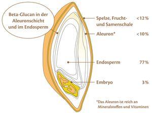 Gerste senkt den Cholesterinspiegel