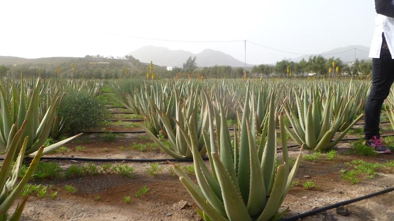 P1040754 Fuerteventura die älteste Insel der Kanaren