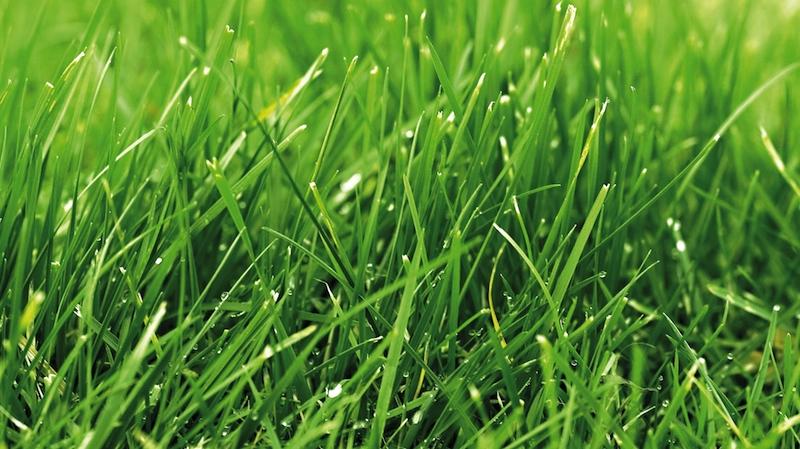 herbe gazon vert en gros plan1 Ein schöner Rasen freut den Hobbygärtner
