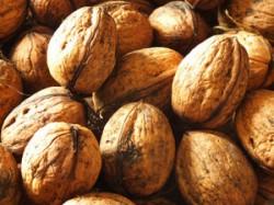 Zehn Gramm Nüsse pro Tag verlängern das Leben