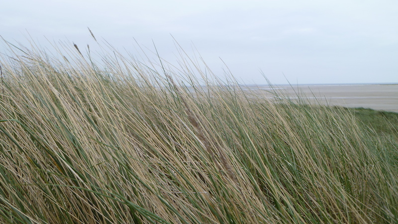P1050187 Insel Amrum – kleine Insel, große Freiheit