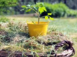 Strengere Regeln für Pflanzenschutzmittel im Haus- und Kleingartenbereich