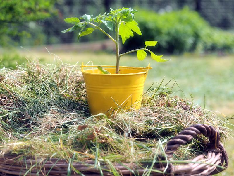 691112 original R B by luise pixelio.de  Strengere Regeln für Pflanzenschutzmittel im Haus  und Kleingartenbereich