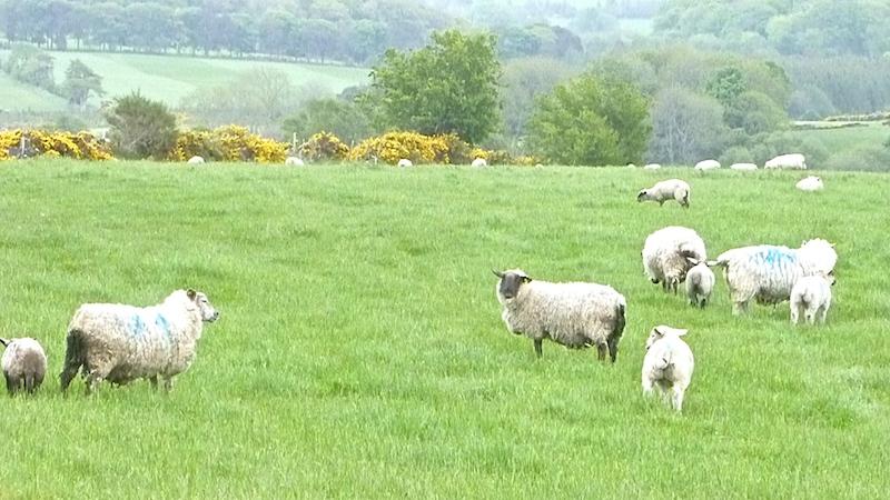 P1050268 Eine Woche Irland und die Welt sieht anders aus