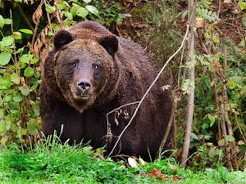 Bären: US Park schließt wegen Selfie Wahn
