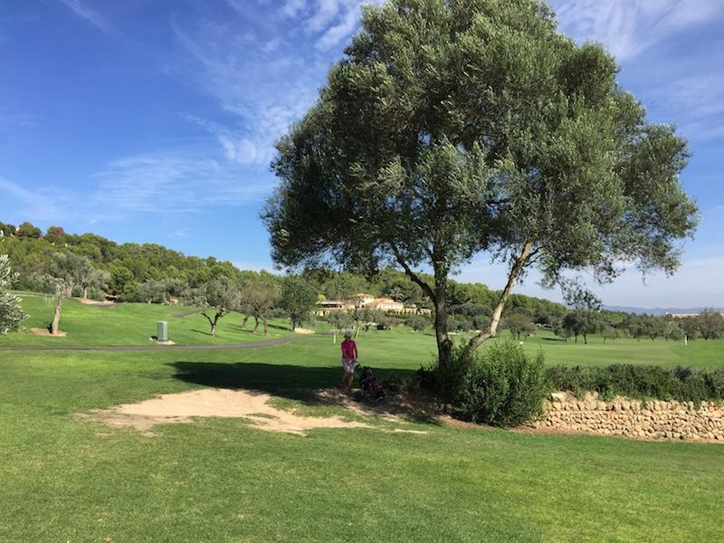 IMG 10352 Mallorca hat immer Saison
