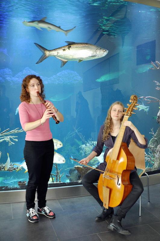 BachamDach GuentherHulla Haus des Meeres präsentiert Bach im Meer