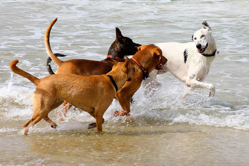 spielende hunde Reisen mit Hund ohne Gefahr