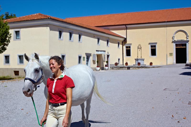 Lipica Stud Farm 17 Lipica das Lipizzanergestüt in Slowenien