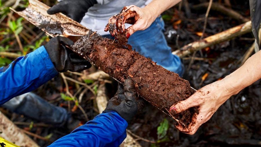 Für eine exakte Bodenprobe verwendet das Außenteam von Conservation International einen Sedimentkernsammler, der eine Tiefe von 50 cm entnimmt und den CO2 Gehalt und die Dauer der Zeit, in der er gespeichert war, misst.