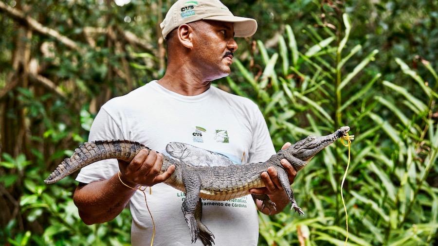 Das Mangroven-Ökosystem zu schützen ist Teamarbeit. Betsabe López Macias ist ein ehemaliger Krokodiljäger, der jetzt mit Conservation International und deren Partnern zusammenarbeitet, um die lokale bedrohte Spezies der Spitzkrokodile zu erhalten.