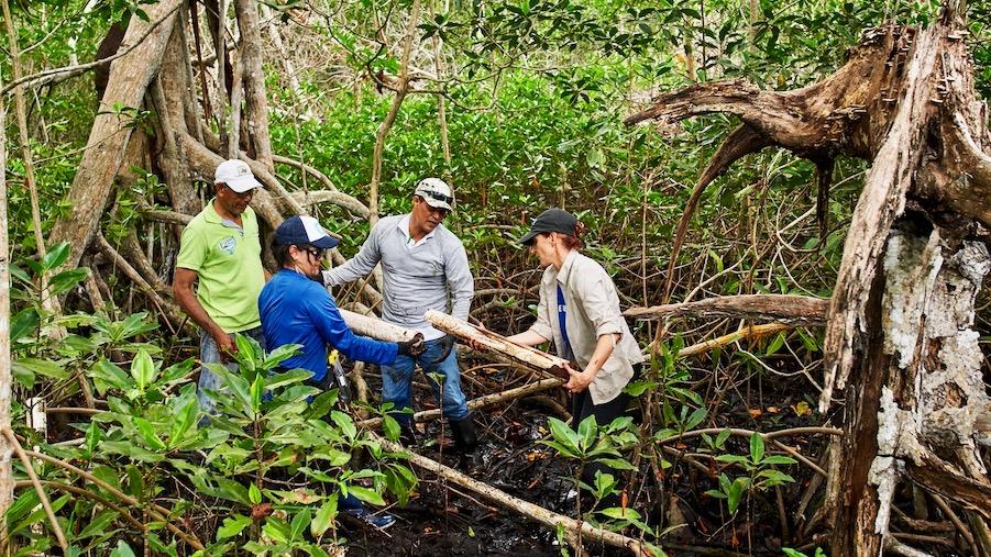 María Claudia Díazgranados Cadelo von Conversation International, Selene Rojas Aguirre von Invemar und ein Team aus Feldassistenten nehmen eine Bodenprobe an einem von 25 Erdbodenstandorten für einen CO2 Test.