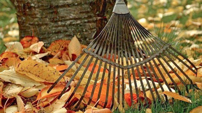 Es gibt viele Möglichkeiten, das bunte Herbstlaub zu nutzen. Foto: pixabay.com/Bund deutscher Baumschulen e.V./akz-o